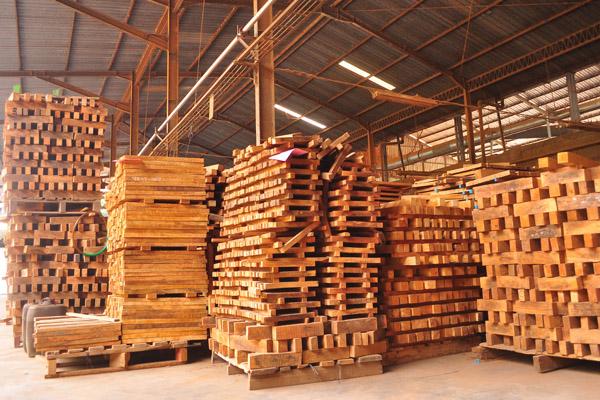 Pemrosesan kayu di pabrik. Kini perusahaan pengimpor kayu akan terkena hukuman semakin berat jika memakai produk curian dari berbagai negara berkembang. Upaya melacak asal kayu berbasis DNA, kini digunakan untuk mencari asal kayu yang menjadi komoditi perdagangan. Foto: Aji Wihardandi