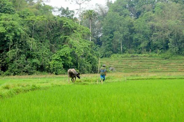 Lahan warga adat sudah terbagi-bagi, ada buat pemukiman, hutan yang tak boleh dimasuki sembarangan dan lokasi bertani. Foto: Eko Rusdianto