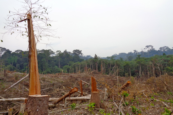 Cleared forest near the village of Tumbang Bahanei in the province of Central Kalimantan. Residents are trying to stop timber companies from encroaching on their land. Photo by Indra Nugraha.