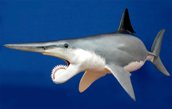 Helicoprion. Sumber: sci-news.com