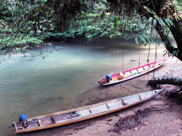 Forest along a stream near Setulang. Photo by Yustinus S. Hardjanto.