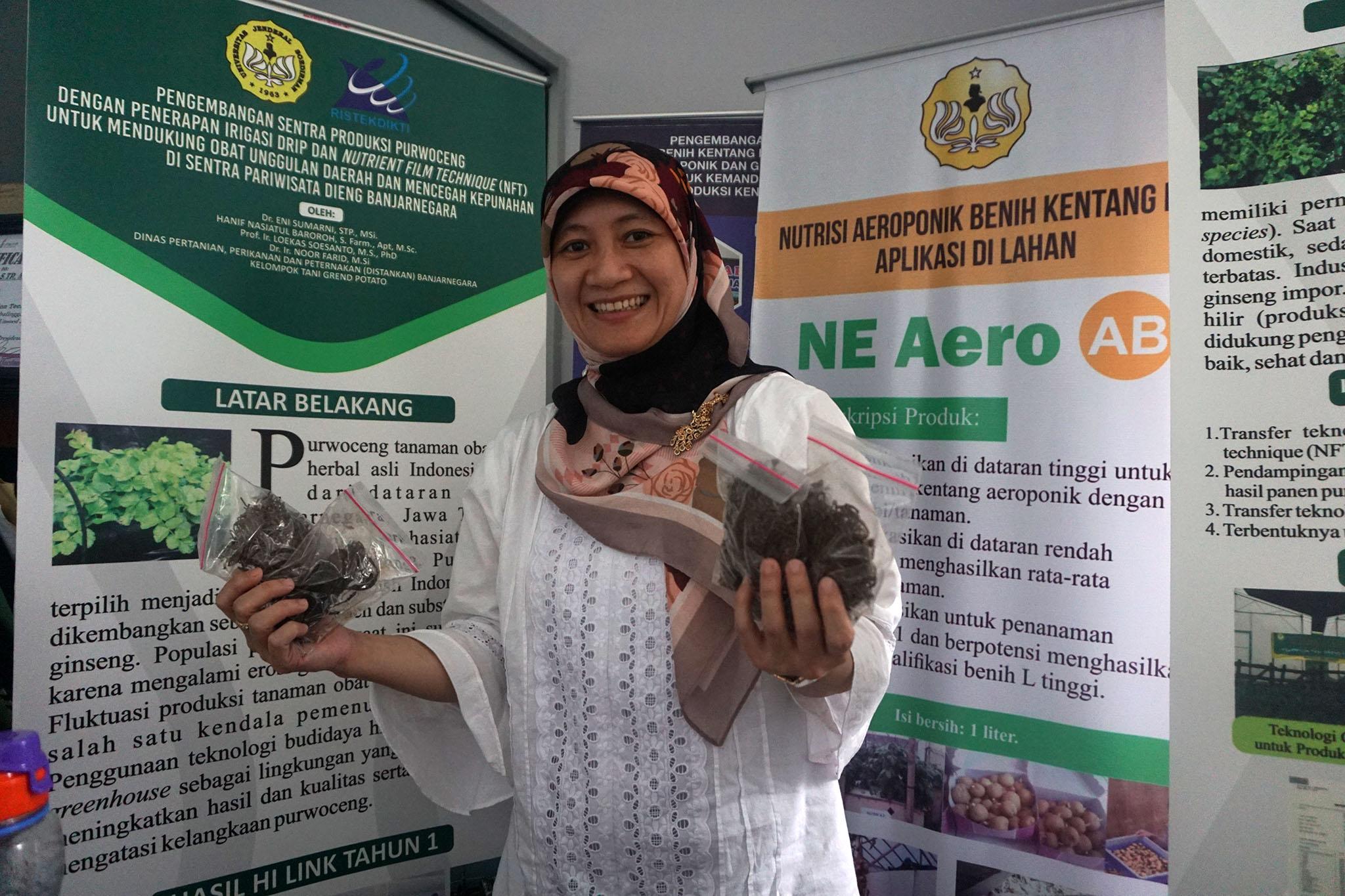 Peneliti Teknologi Pertanian Unsoed Eni Sumarni memperlihatkan akar Purwaceng yang telah dikeringkan | Foto: L Darmawan/Mongabay Indonesia