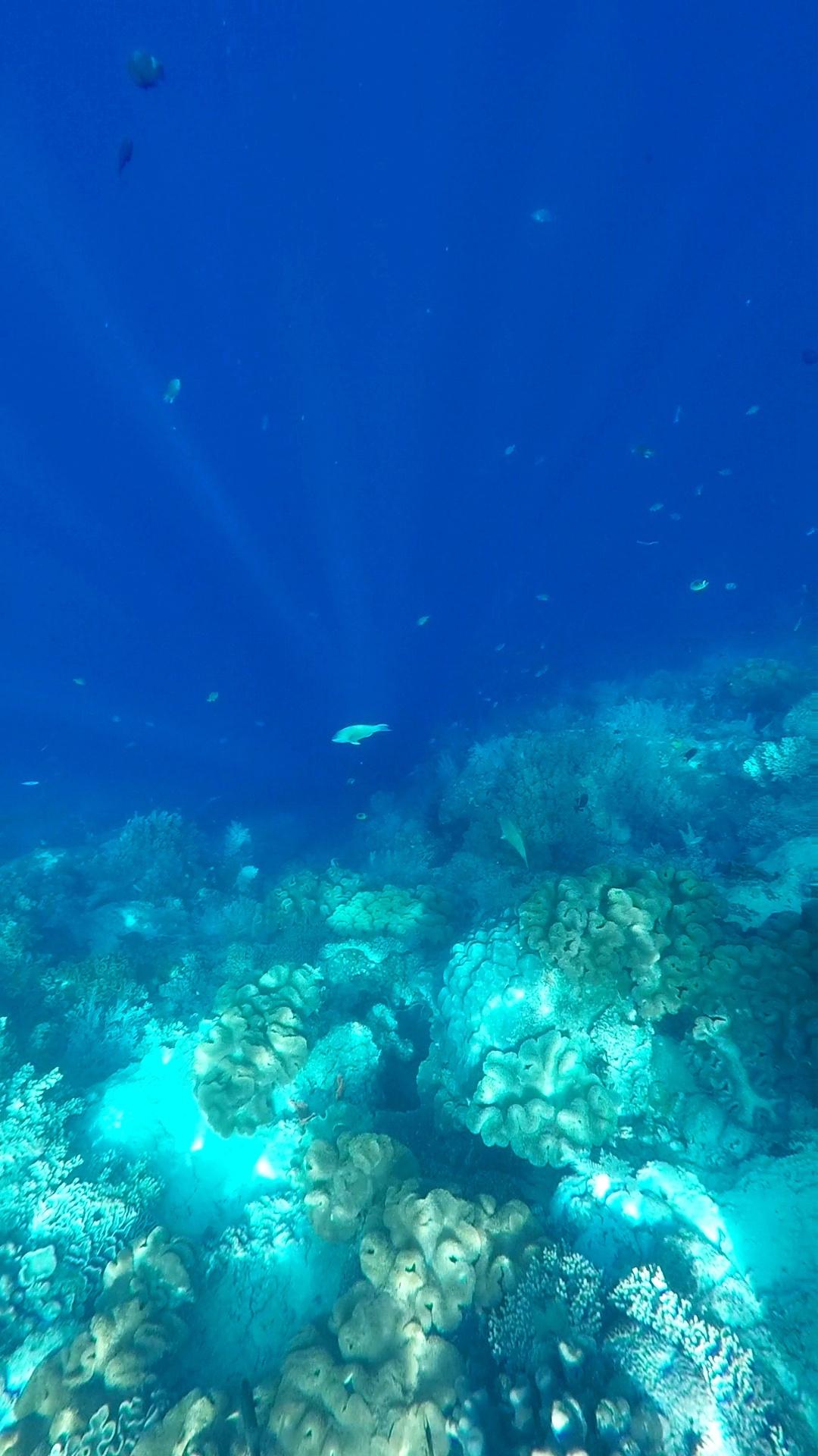 Menikmati Banda Neira Dari Pala Hingga Biota Lautnya