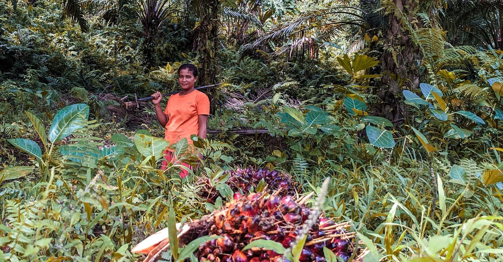 Perempuan memanen sawit di Baribi. Foto: Agus Mawan/ Mongabay Indonesia